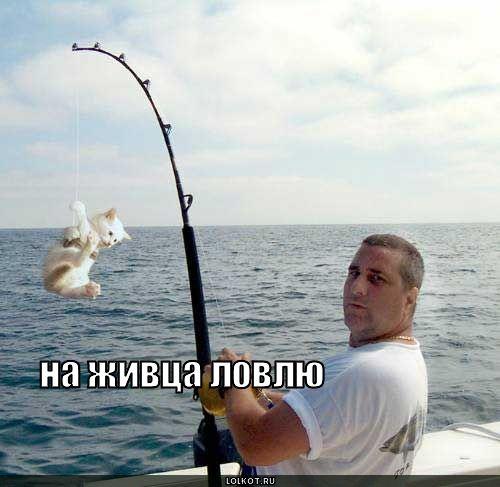 на живца ловлю