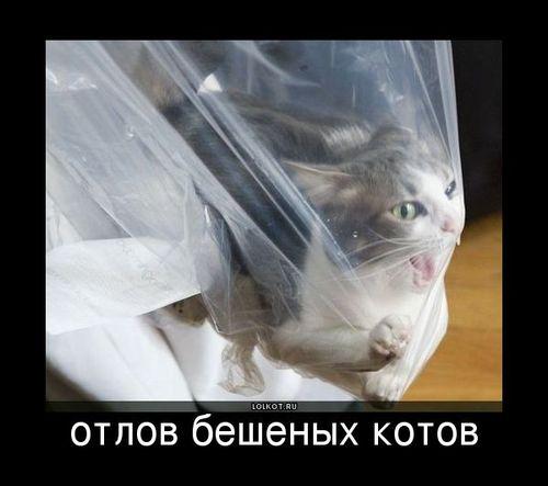 отлов бешеных котов
