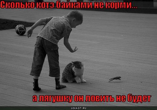сколько котэ не корми...