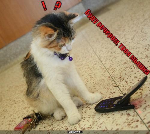 твоя мышка