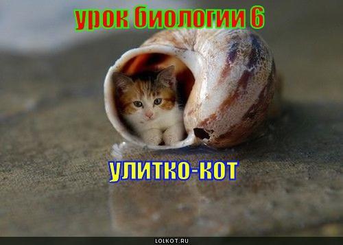улитко-кот