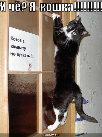 я  кошка!