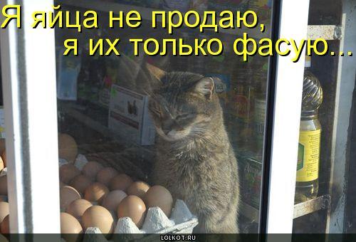 яйца не продаю