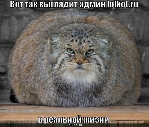 админ lolkot.ru