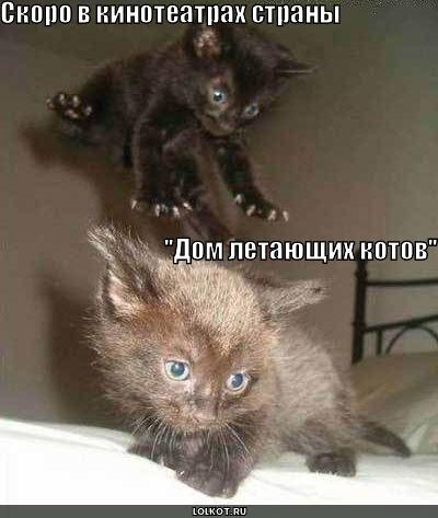 """""""дом летающих котов"""""""
