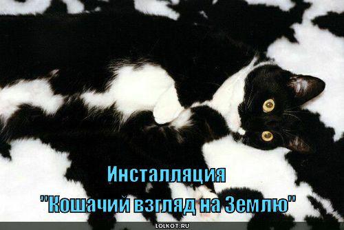 кошачий взгляд на землю