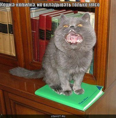 кошка-копилка