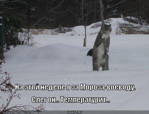 мороз-воеводу