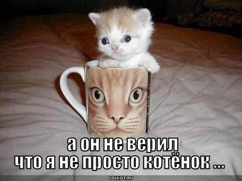 не просто котёнок