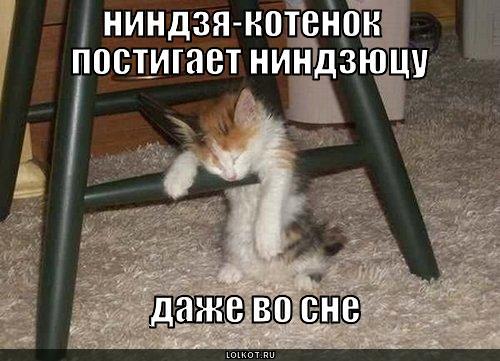 ниндзя-котенок