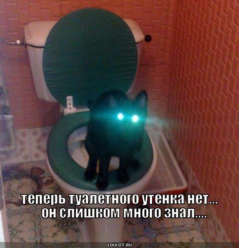 туалетного утенка нет
