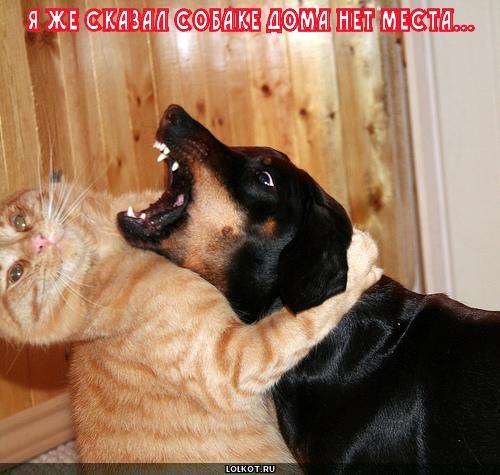 собаке нет места