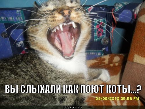 как поют коты