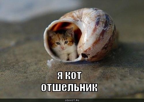 кот отшельник