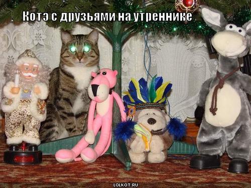 котэ с друзьями