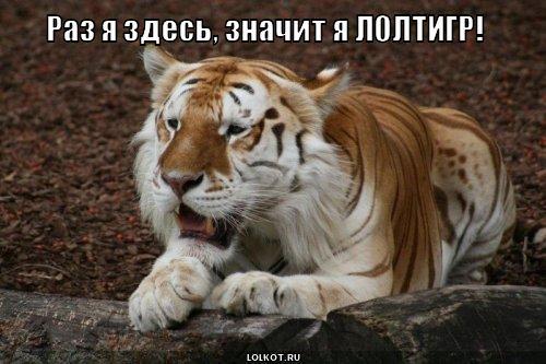 лолтигр