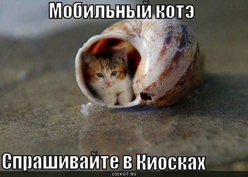 мобильный котэ