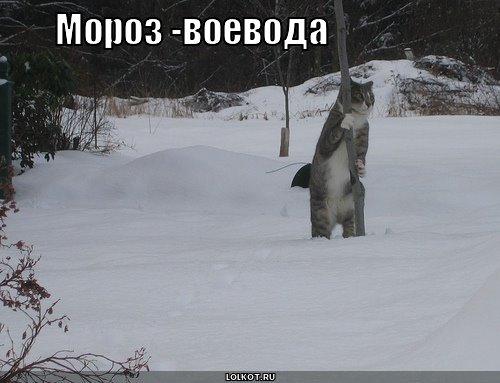 мороз-воевода