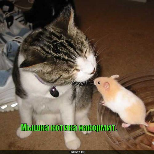 мышка котика накормит