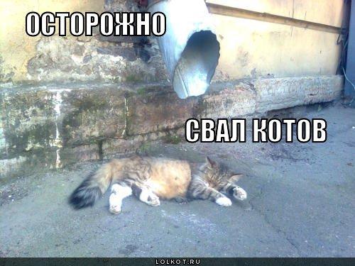 свал котов