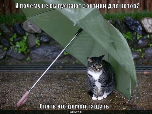 зонтики для котов