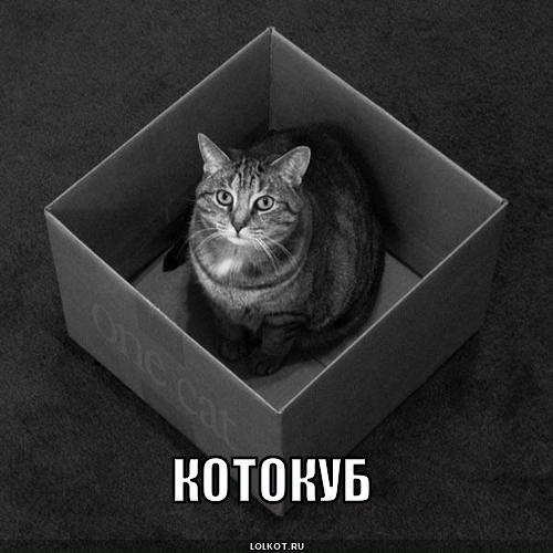 котокуб