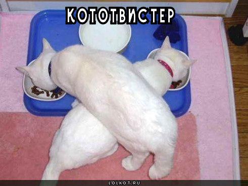 кототвистер
