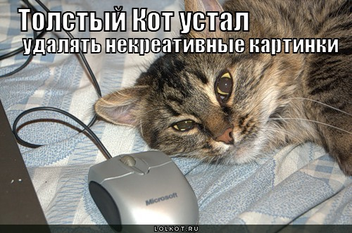 толстый кот устал