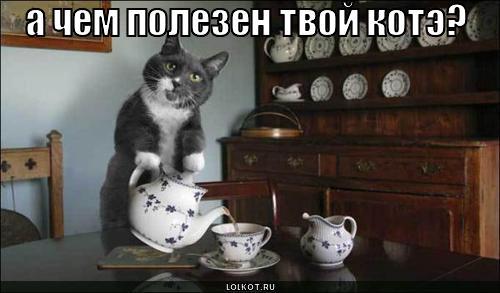 чем полезен котэ?