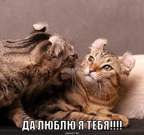 люблю я тебя!