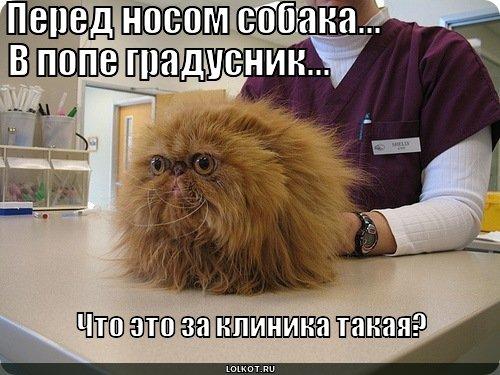 Что это за клиника?