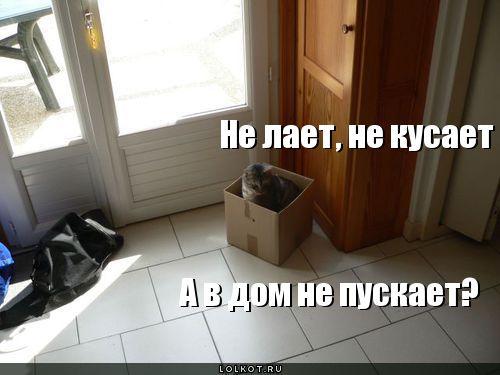 в дом не пускает