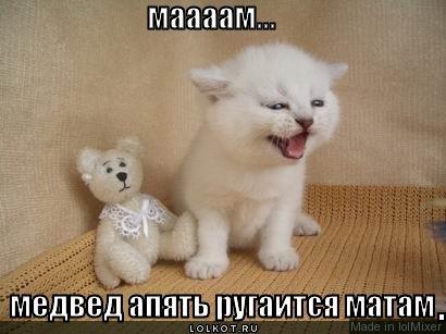 медвед ругается