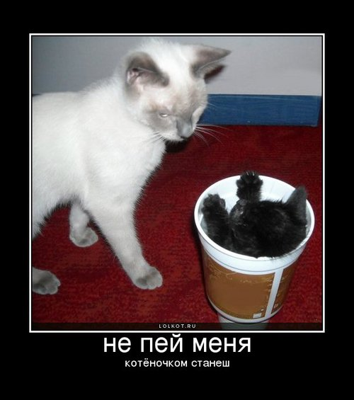 не пей меня