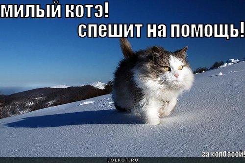 милый котэ