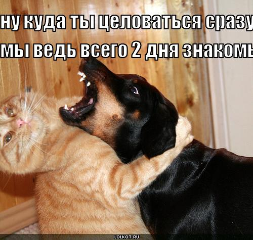 ну куда ты целоваться...