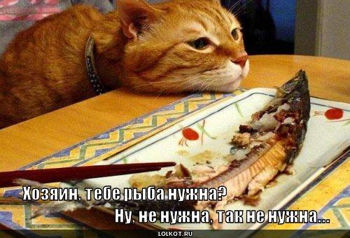 тебе рыба нужна?