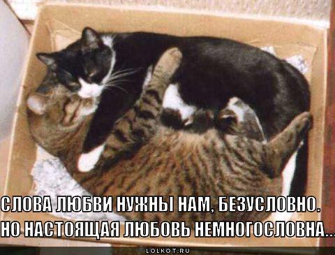 любовь немногословна