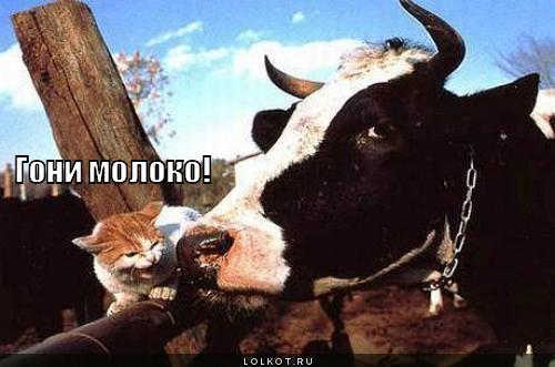 гони молоко!