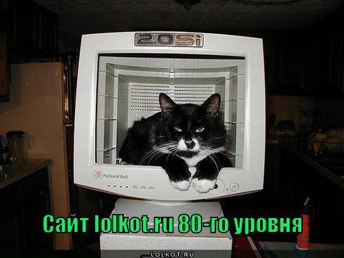 lolkot.ru 80-го уровня