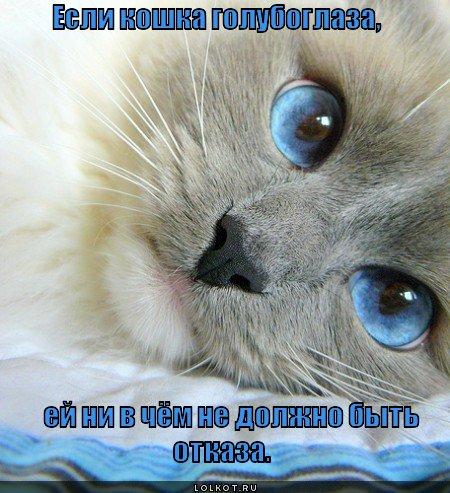если кошка голубоглаза