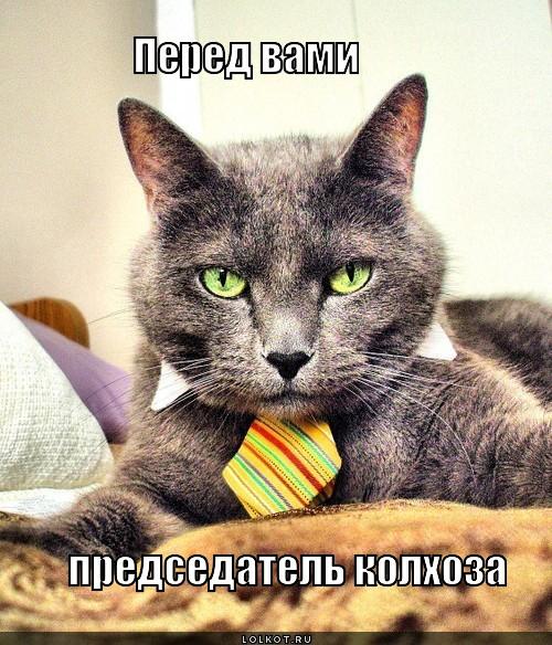 перед вами председатель колхоза
