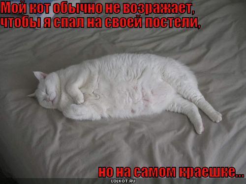 кот не возражает