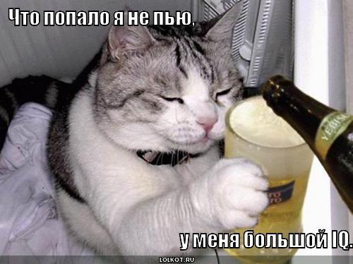 большой iq