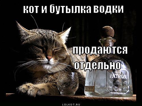 кот и бутылка водки