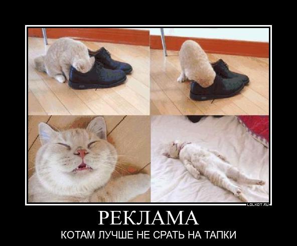 реклама котам лучше не срать на тапки