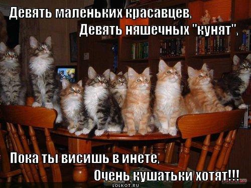 а ты покормил котэ?