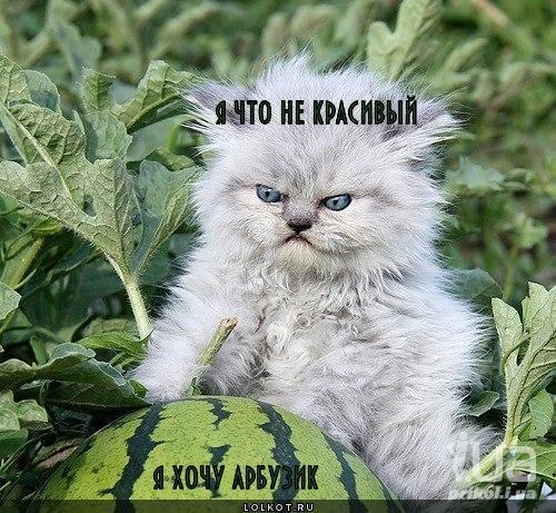 хочу арбузик