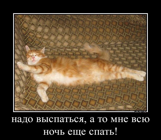 Кошка Соня.