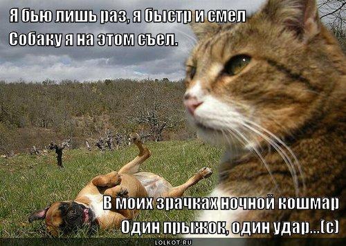Я - кот Матвей